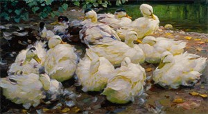 Image of Moulting Ducks