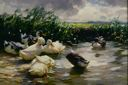 Image of Ducks in Green Water
