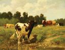 Image of Cattle in Meadow
