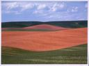 Image of Palouse Pattern III
